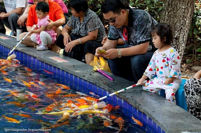 Развлечение по-китайски — для детей и взрослых!