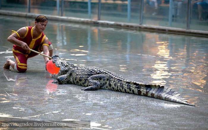 Сафари-парк в Гуанчжоу (Китай). Вторая серия
