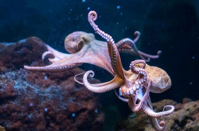 Октлантис: город осьминогов
