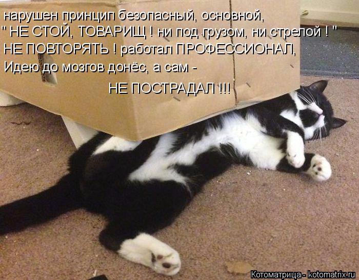 kotomatritsa_F (700x546, 367Kb)