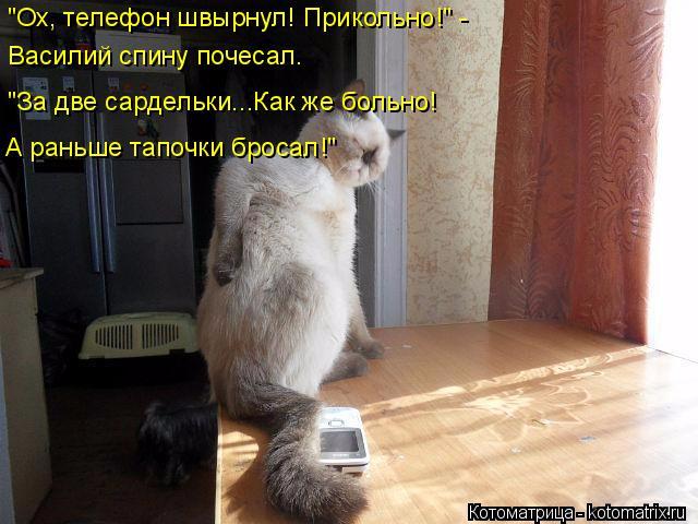 kotomatritsa_I (640x480, 263Kb)