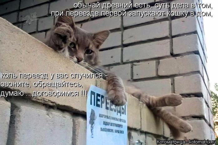 kotomatritsa_O (700x466, 317Kb)