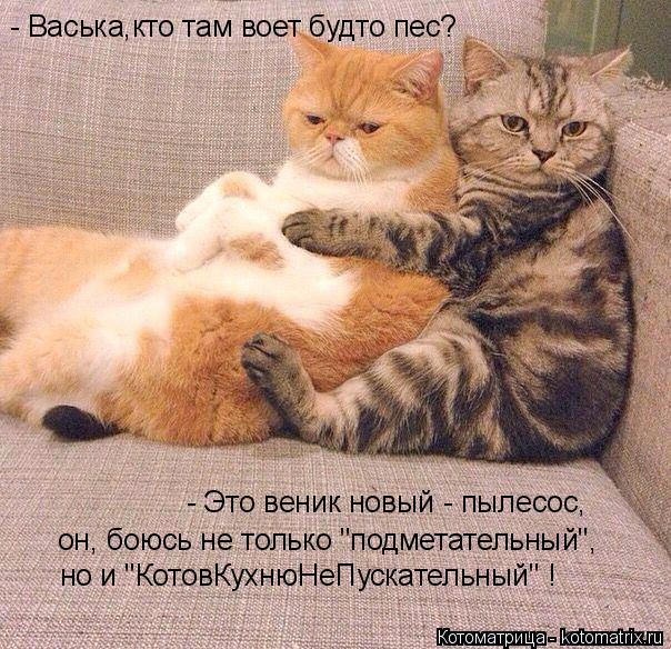 kotomatritsa_r4 (604x584, 408Kb)