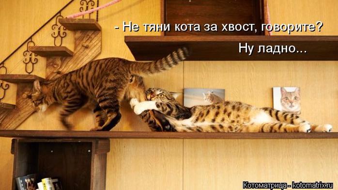 kotomatritsa_W (700x392, 294Kb)