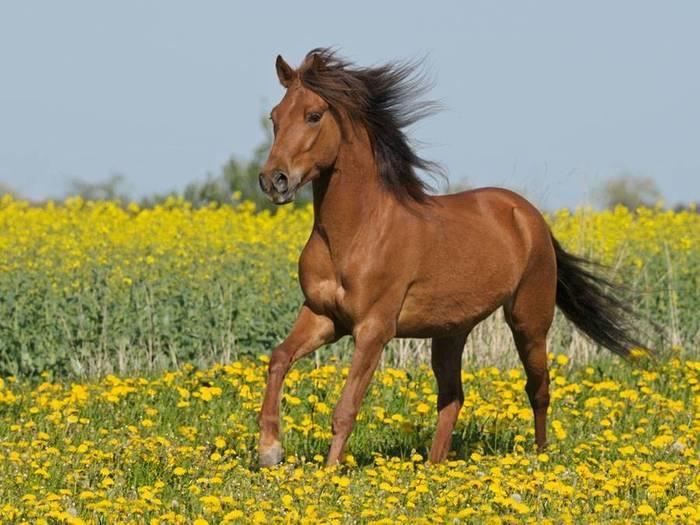 конь (700x525, 60Kb)