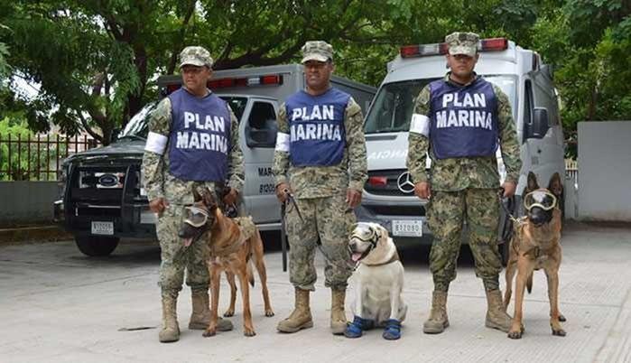 Лабрадор Фрида в Мексике помогла спасти из под завалов более 50 человек