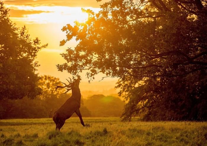 Живая природа в фотографиях