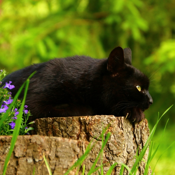 2714816_2017Animals___Cats_A_beautiful_black_cat_lies_on_a_stump_115106_31 (700x700, 338Kb)