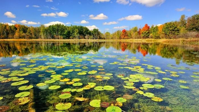 Природа   переход от лета к осени