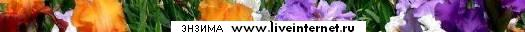 4387736_Enzima (525x32, 24Kb)