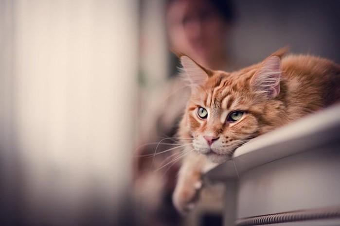 137408907 092417 0926 3 Поддаются ли коты воспитанию