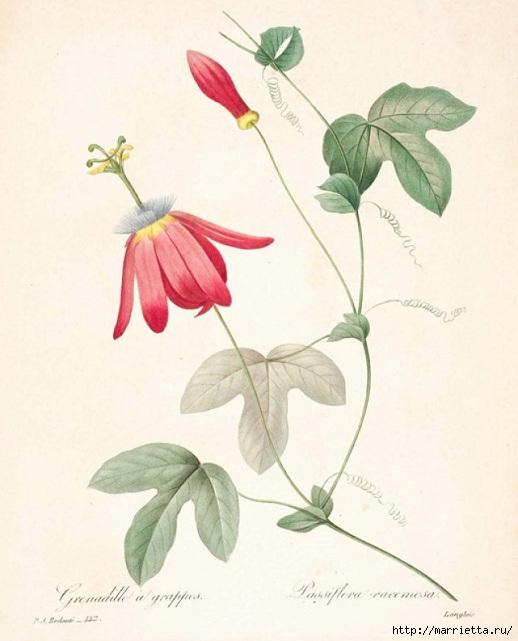 Цветы объемной вышивкой гладью. Красивые работы (10) (518x641, 161Kb)