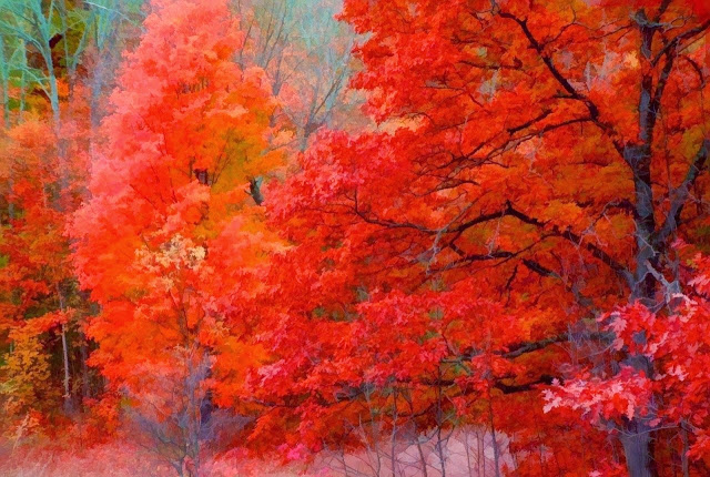 Michigan Autumn trees (640x430, 129Kb)