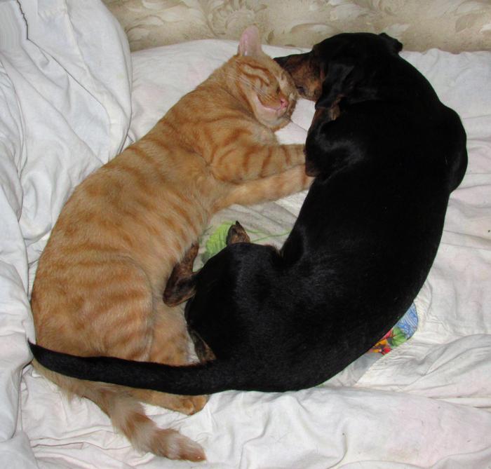 Как кошка с собакой/683232_greyut_postel (700x669, 389Kb)