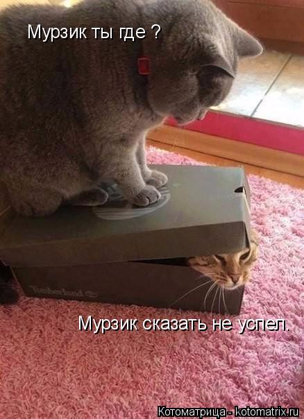 kotomatritsa_B (438x604, 197Kb)