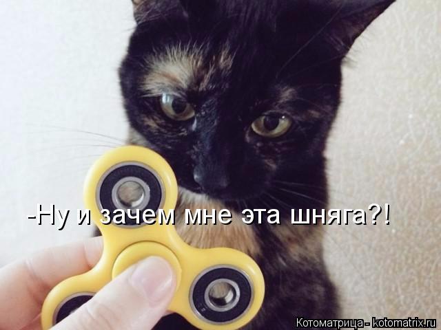 kotomatritsa_i (640x480, 179Kb)