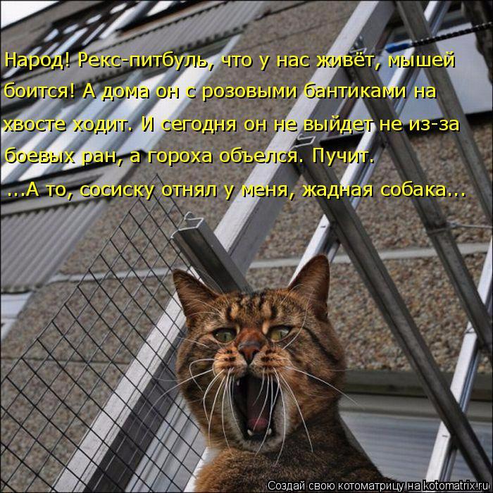 kotomatritsa_q (700x700, 529Kb)