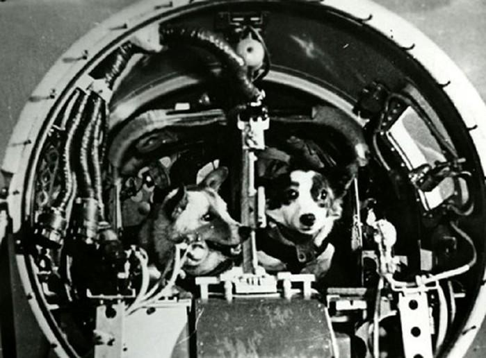 Дезик и Цыган - первые животные, поднявшиеся к верхним слоям атмосферы