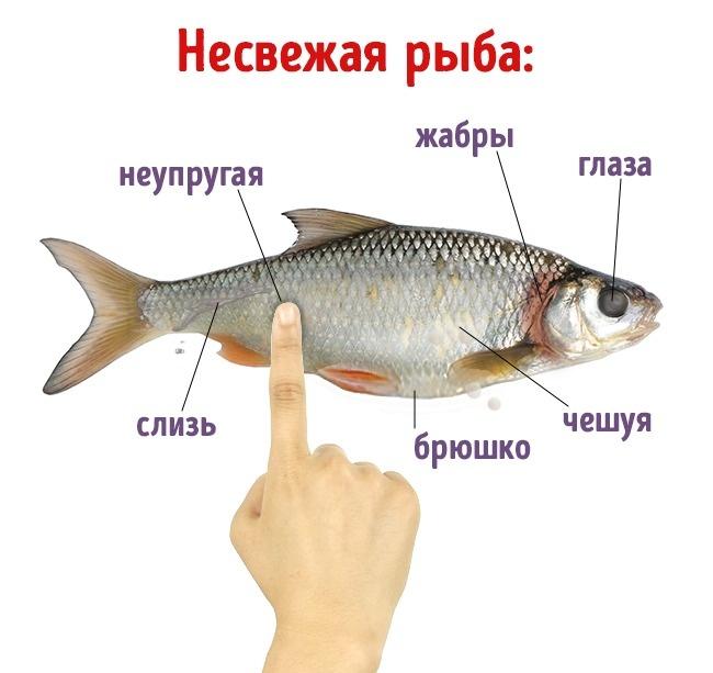 Как выглядит несвежая рыба