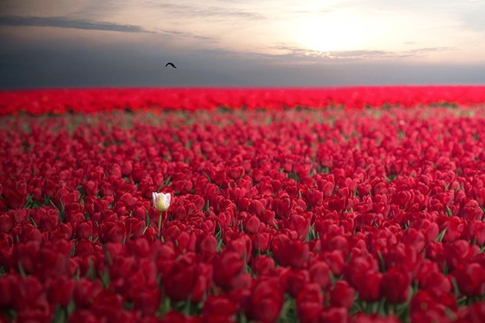 21 фотография невероятной природной красоты