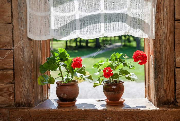 depositphotos_55317555-stock-photo-geranium-flowers-on-the-window (700x470, 383Kb)