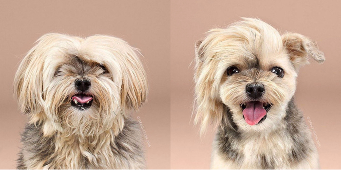 dog-transformation-before-and-after (700x350, 240Kb)
