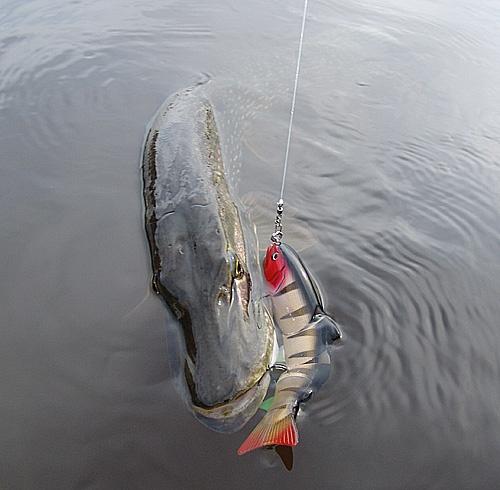 купить живца для рыбалки в калуге