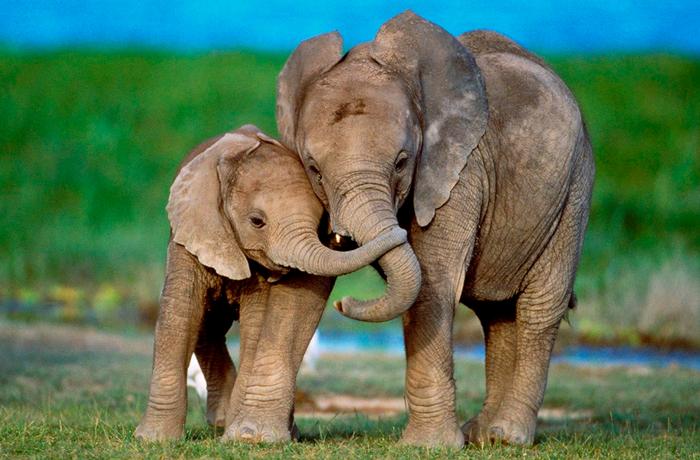 sloniki (700x460, 420Kb)