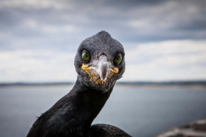 Самые красивые фотографии дикой природы на этой неделе