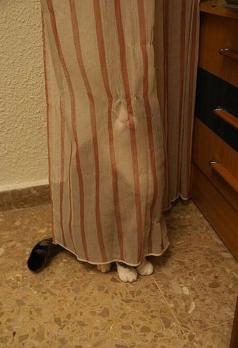 cat-hid-02 (479x700, 273Kb)