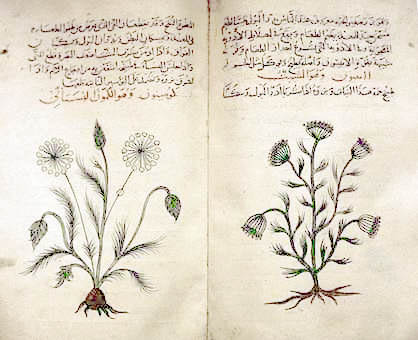 Arabic_herbal_medicine_guidebook (1) (418x340, 58Kb)