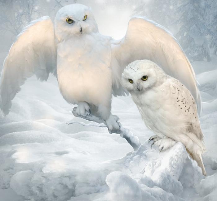 winter_owls_by_elenadudina-dackuvu (700x650, 291Kb)