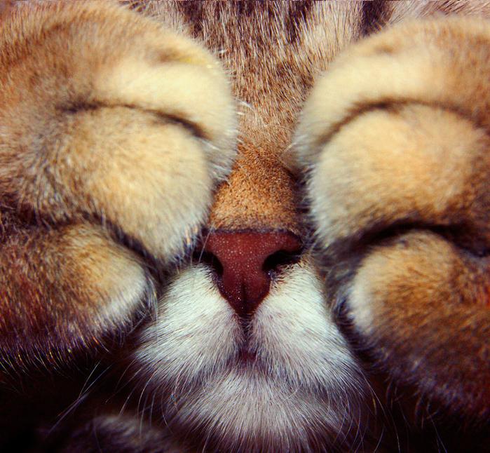 shy_kitten_stock_1_by_elenadudina-d576wo7 (700x646, 713Kb)