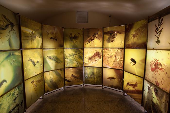 музей янтаря калининград фото 9 (700x466, 388Kb)