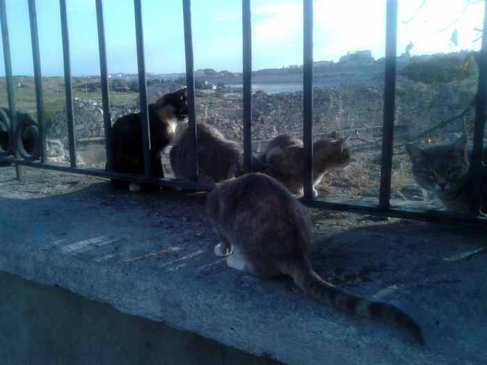 коты (700x525, 405Kb)