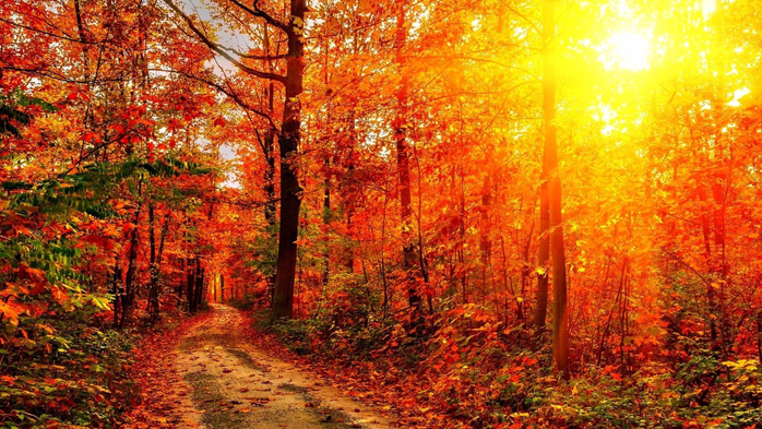 Autumn-Sunshine-Wallpapers (700x393, 524Kb)