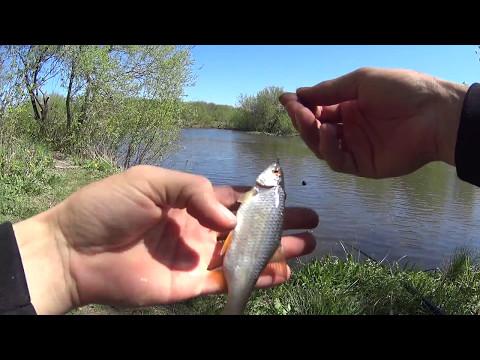 видео как правильно ловить карася ранней весной