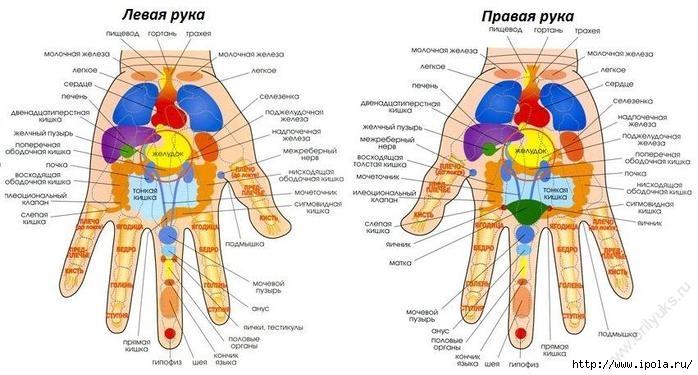 "alt=""Связь между пальцами рук и внутренними органами""/2835299_Svyaz_mejdy_palcami_ryk_i_vnytrennimi_organami (700x375, 158Kb)"