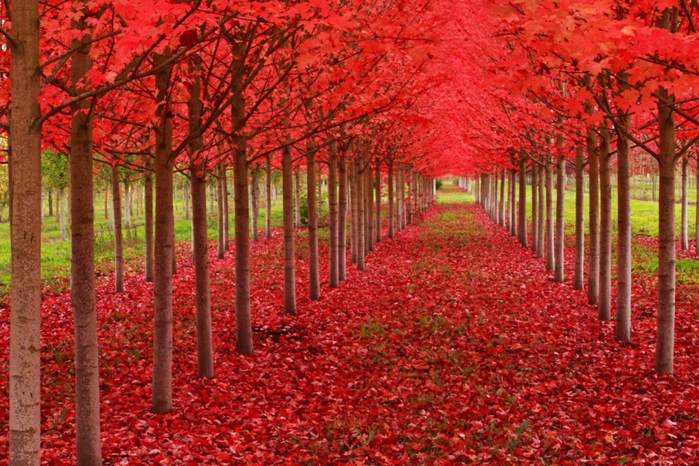 Top_14_must_beautiful trees (7) (700x466, 494Kb)