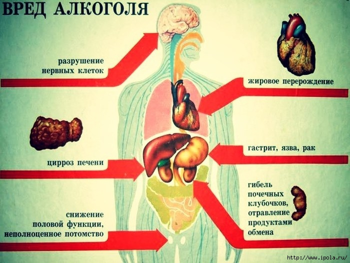 "alt=""Что с нами делает алкоголь?""/2835299_pytalkogolyavorganizmecheloveka (700x525, 218Kb)"