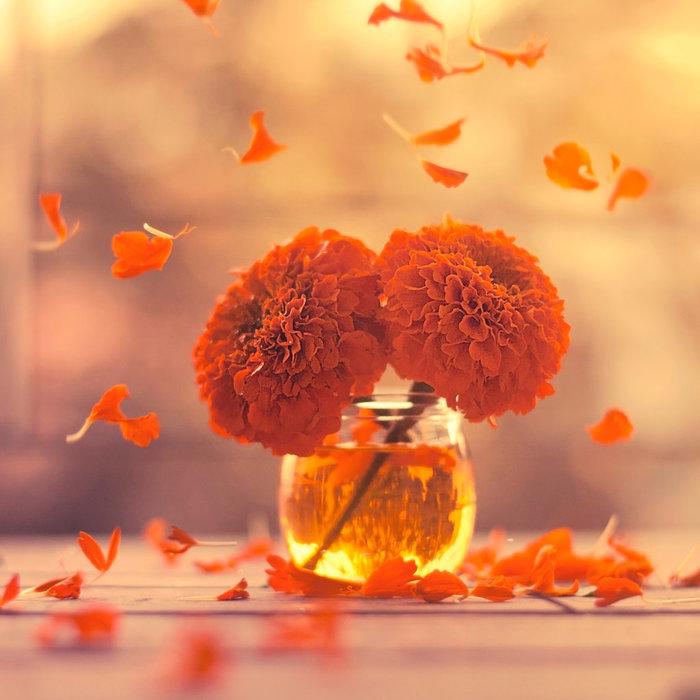 marigold_days_by_arefin03-d76p4mi (700x700, 80Kb)