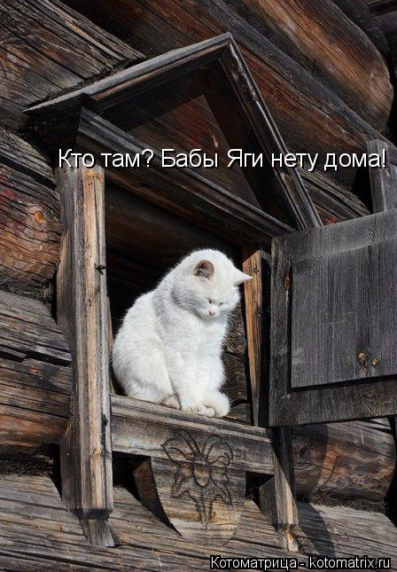 kotomatritsa_- (448x645, 300Kb)