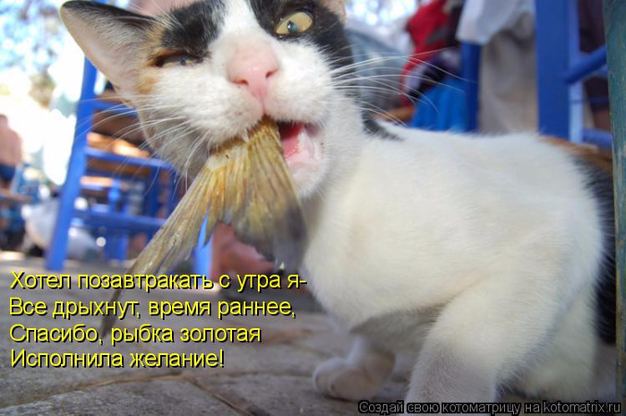 kotomatritsa_4 (700x464, 328Kb)