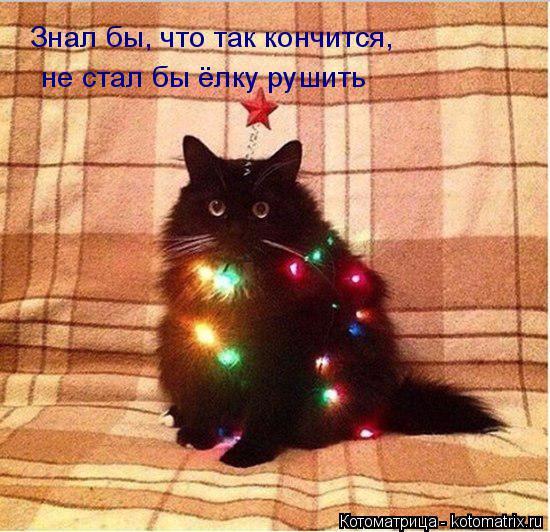 kotomatritsa_A (550x532, 328Kb)