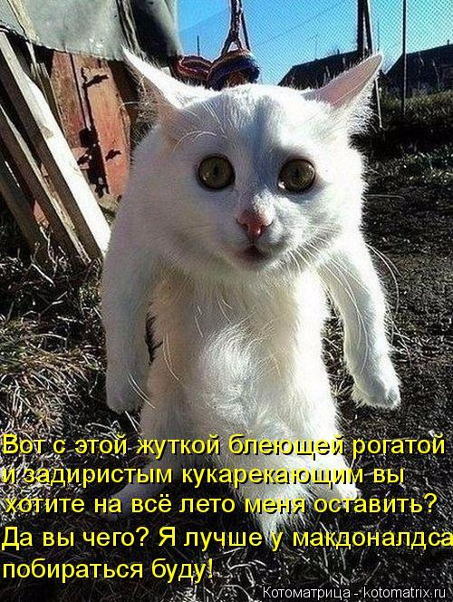 kotomatritsa_Hk (500x664, 461Kb)
