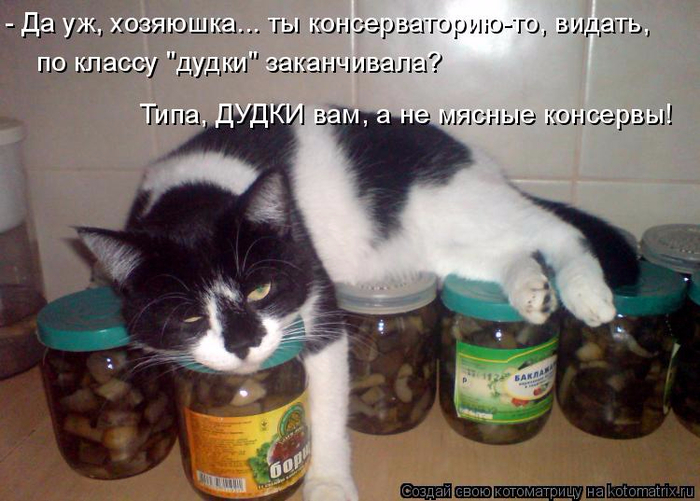 kotomatritsa_J (700x501, 350Kb)