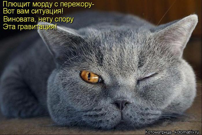 kotomatritsa_U (700x467, 325Kb)