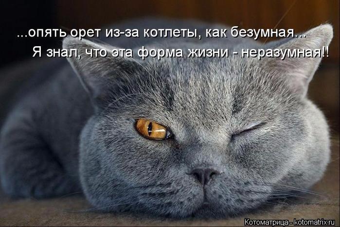kotomatritsa_w (700x467, 298Kb)