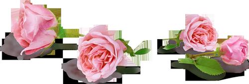 розы (500x169, 103Kb)