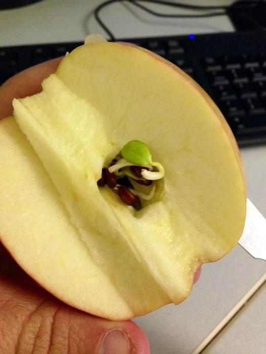 Удивительные кадры проросших фруктов и овощей